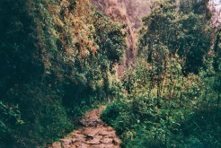 The trail leading towards Intipata