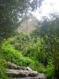 The trail through the jungle