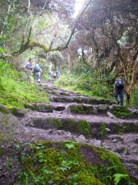The steps becoming much bigger steeper