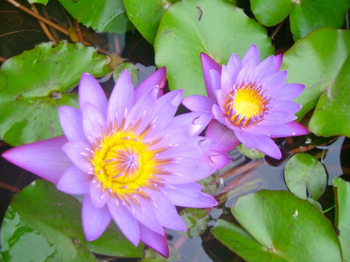 The Kundalini Awakening Rowing Through Life