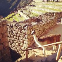 June 21, 2012: Machu Picchu, Peru