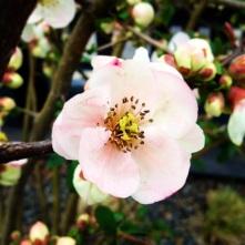 RTL YPIIBTL_Spring Blossoms_2