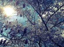 RTL_YPIIBTL_Central Park
