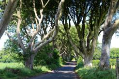 Dark Hedges, also known as Kings Road in Game of Thrones